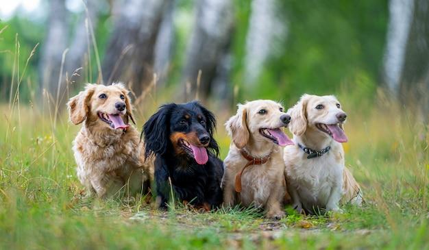 Fröhliche und süße gruppe kleiner rassen auf naturhintergrund. tiere und hunde.