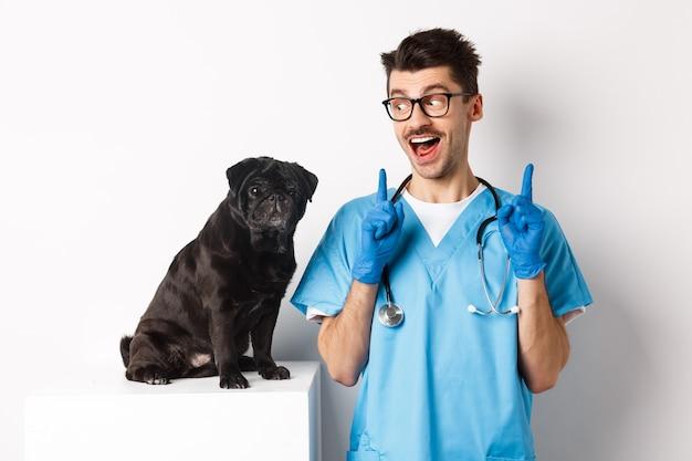 Fröhlicher, gutaussehender tierarzt in peelings, der glücklich auf den süßen kleinen hundemops starrt und lächelt, mit den fingern auf das promo-angebot zeigt, weißer hintergrund