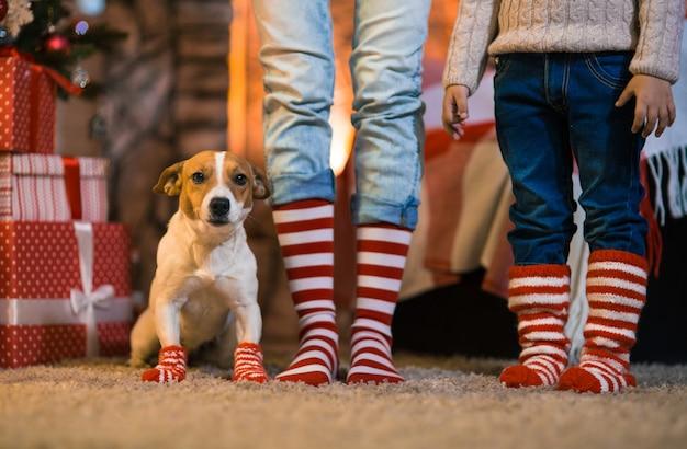 Frohe weihnachten. familienkinderbeine und hund in gestreiften roten und weißen socken unter dem weihnachtsbaum in girlanden und geschenken