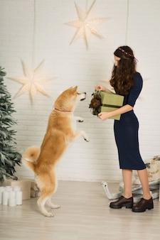 Frohe weihnachten und ein glückliches neues jahr! das mädchen gibt ihrer hunderasse akita inu weihnachtsgeschenk im karton