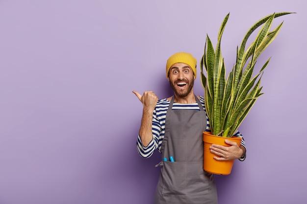 Frohes verkäufer posiert im blumengeschäft mit topf der grünen schlangenpflanze