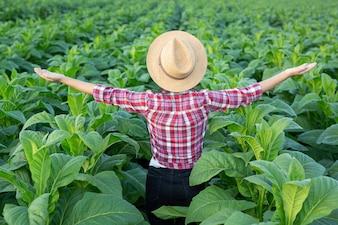 Fröhliche junge Frau in einer Tabakplantage.