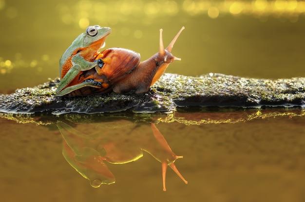 Frosch auf der schnecke