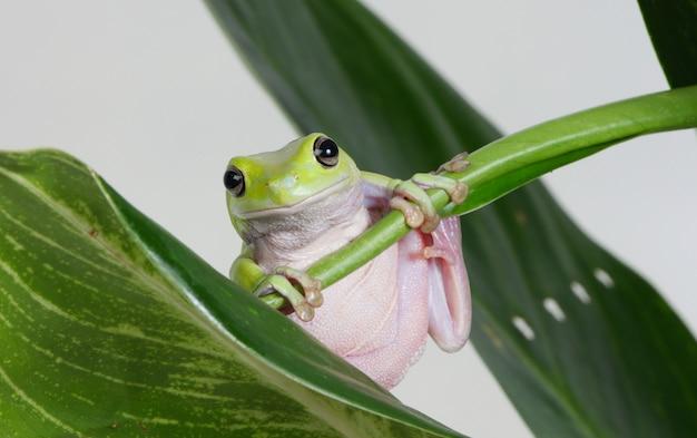 Frosch auf einer pflanze