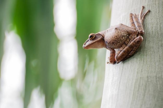 Frosch, der auf baum sitzt