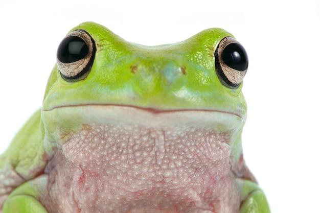 Frosch hautnah