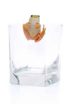 Frosch in glas