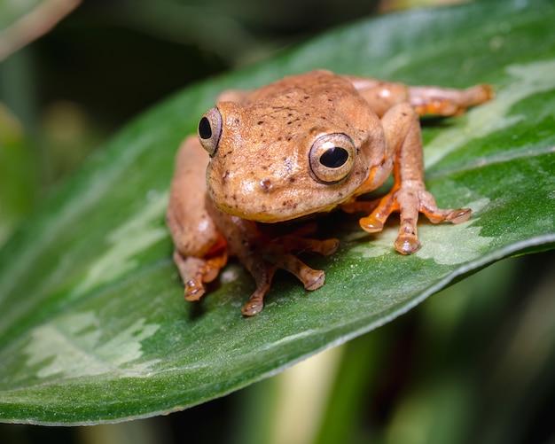 Frosch in sprungposition auf einem grünen blatt