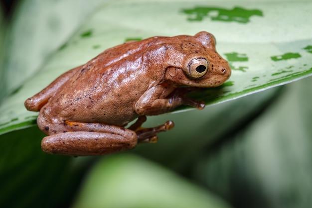 Frosch schaut von oben auf ein blatt