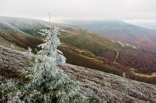 Frost auf baumhintergrund-herbstwald des neuen jahres an den karpatenbergen. erster schnee, treffen des herbstes mit dem winter.