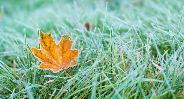 Frost auf blatt und gras.