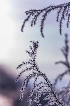 Frost auf dem ast