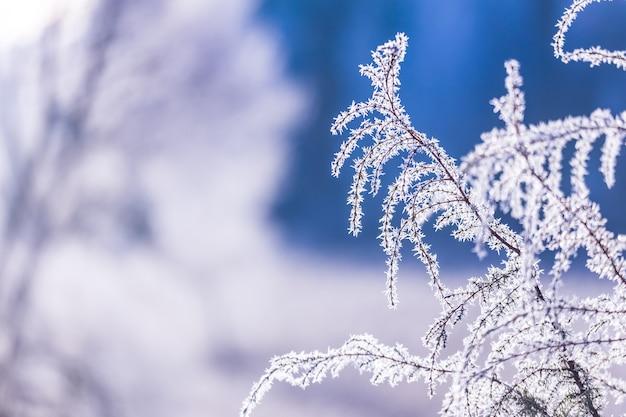 Frost auf einem zweig, schöne winterpostkarte