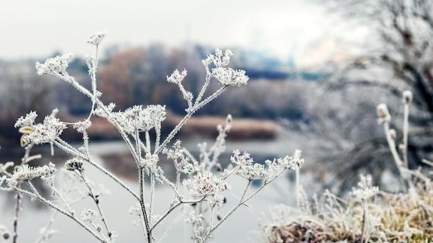 Frostbedeckte pflanzen am flussufer