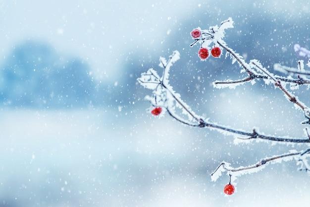 Frostbedeckte zweige von viburnum mit roten beeren auf unscharfem hintergrund während eines schneefalls