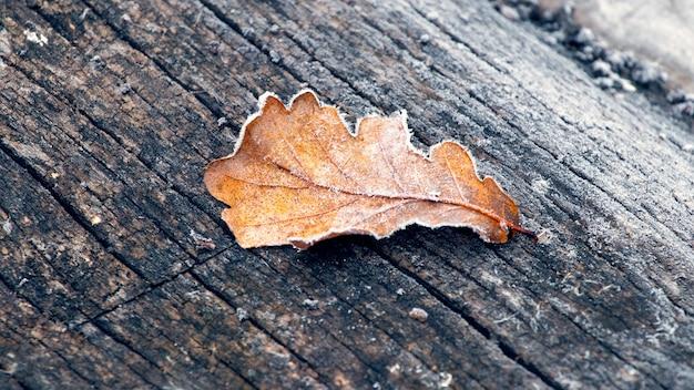 Frostbedecktes trockenes eichenblatt auf einer alten rissigen holzoberfläche