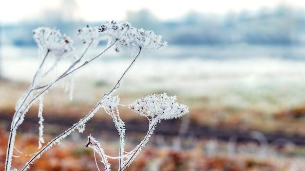 Frostbedecktes trockenes gras auf einem unscharfen hintergrund