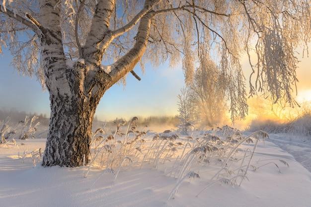 Frostige morgendämmerung