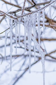Frostigen ast. eiszapfen eingefroren auf einer niederlassung eines baums