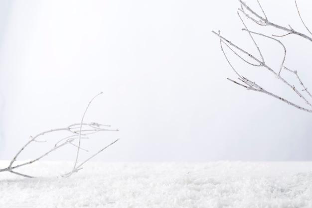 Frostiger ast mit schnee im winter auf weiß. bringen sie ihr produkt an