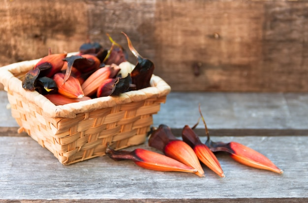 Frucht der araukarien