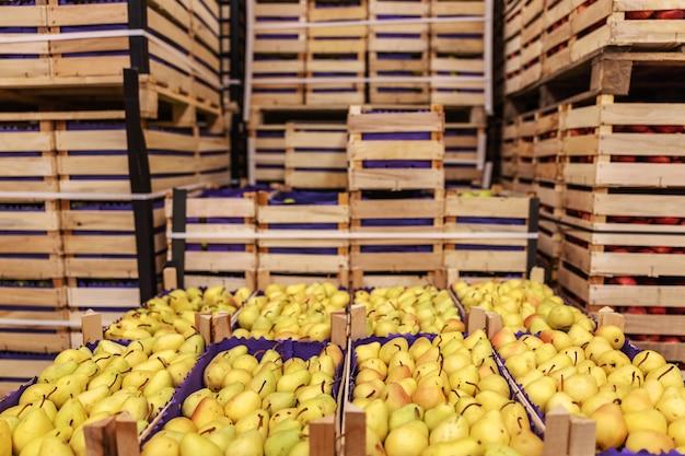 Früchte in kisten versandbereit