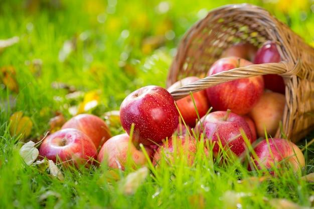 Früchte und blumen im herbst im freien. thanksgiving-feiertagskonzept