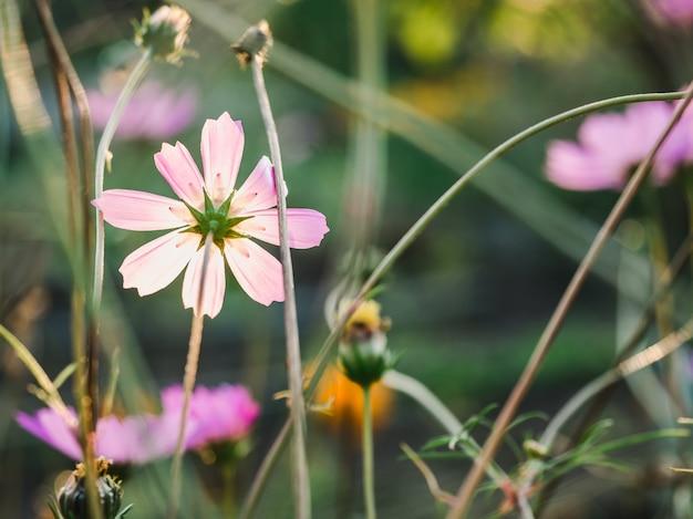 Frühe frühlingsblumen auf einem gras