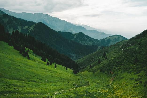 Frühling, abend, berglandschaft. hellgrünes gras im hintergrund von bereichen in schichten geht in einen nebligen dunst über.