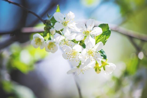 Frühling blühende bäume. blühender garten selektiver fokus natur