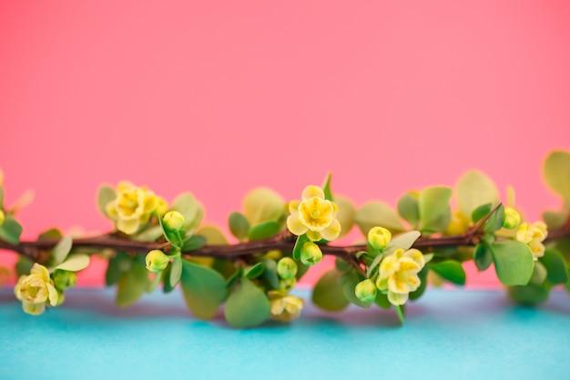 Frühling blühende berberitzenbeerzweig