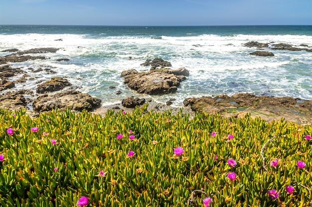 Frühling in kalifornien an der küste von big sur, blumen in voller blüte