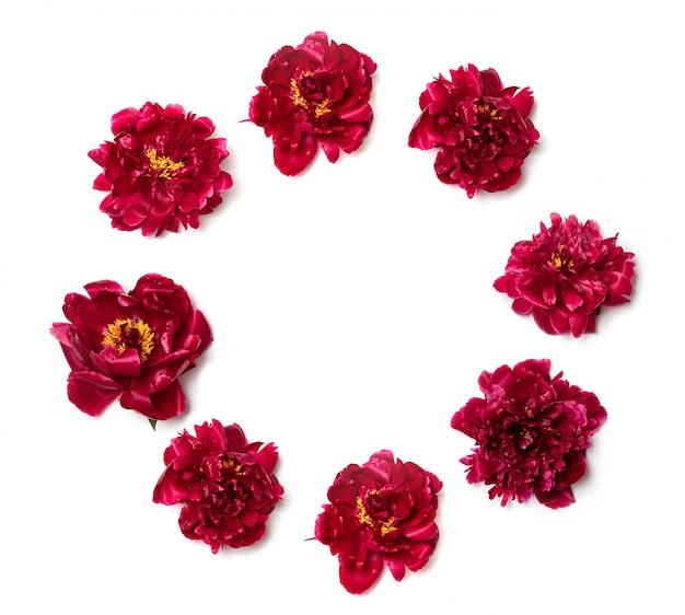 Frühling-konzept. kreativer plan gemacht von den roten pfingstrosen auf weiß