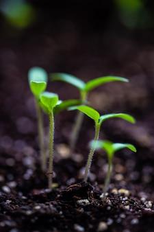 Frühling landwirtschaftskonzept