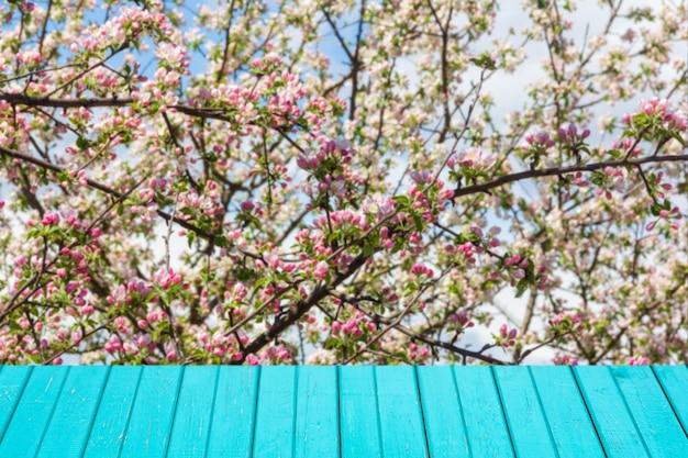 Frühling mit blühendem apfelbaum und hellen türkisfarbenen holzbrettern für produktanzeige