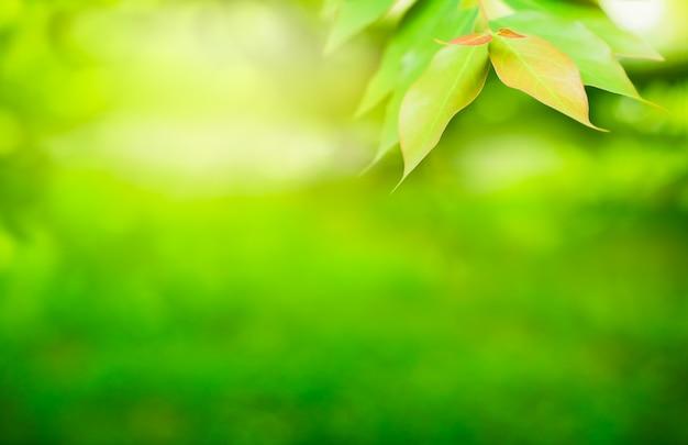 Frühling natürliches grünes blatt im morgenlicht für hintergrund und tapete. natur grün
