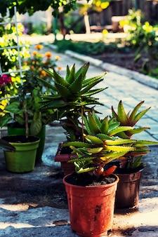 Frühling, pflanzen, pflege