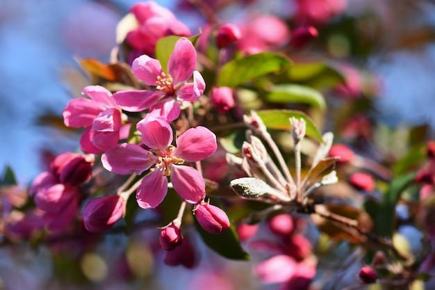 Frühling. schöner blumenfrühlingszusammenfassungshintergrund der natur. blühende zweige von bäumen für sp
