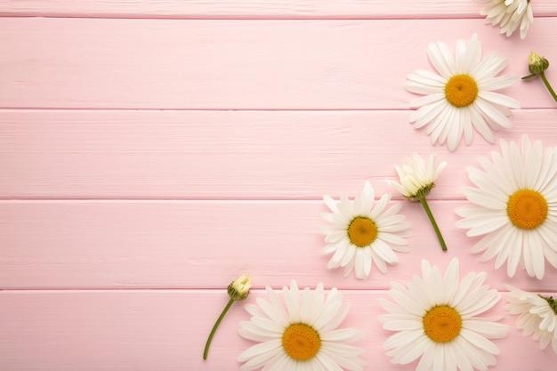 Frühlings- und sommerkamillenblüten auf rosa holzhintergrund. ansicht von oben