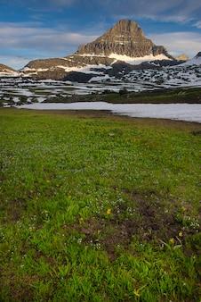 Frühlings-wildblumen im glacier nationalpark