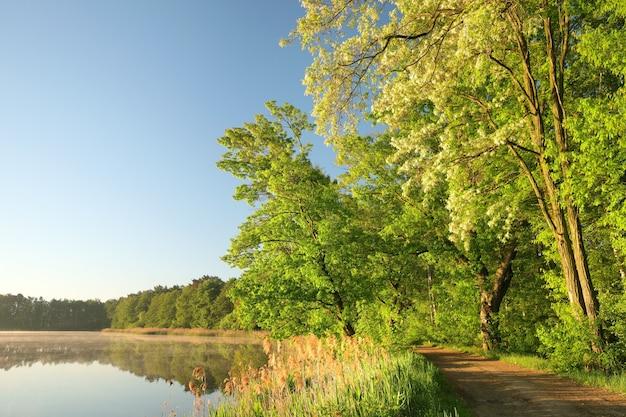 Frühlingsbäume am rande des sees am morgen