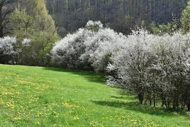 Frühlingsbäume in einer wiese