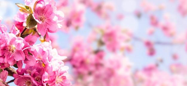 Frühlingsblühende apfelbäume
