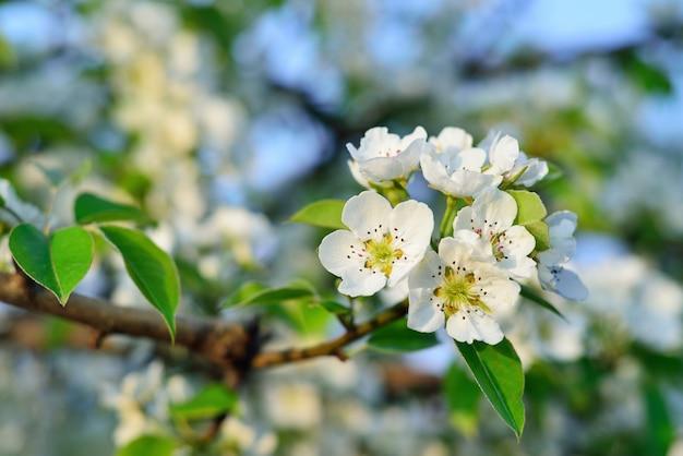 Frühlingsblühende bäume