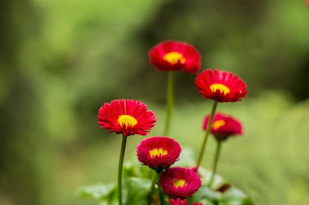 Frühlingsblüte mit defokussiertem hintergrund