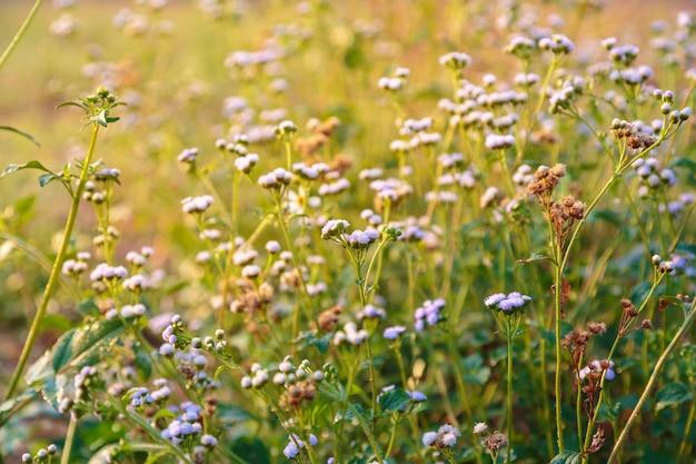 Frühlingsblüte. schöne naturszene mit blühen