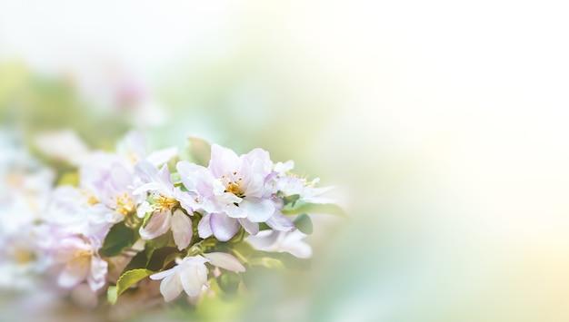 Frühlingsblütengrenze. weichzeichnerbild mit kopierraum