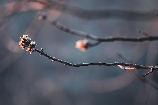Frühlingsblütenhintergrund. schöne naturszene mit blühendem baum und sonneneruption. sonniger tag.