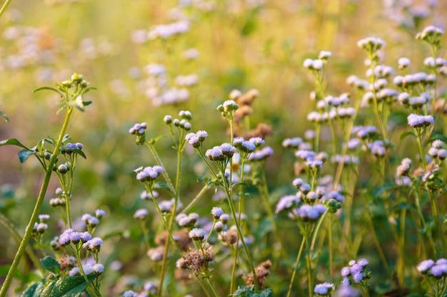 Frühlingsblütenhintergrund. schöne naturszene mit blüte
