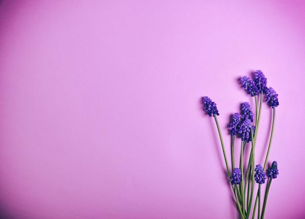 Frühlingsblumen auf einer rosa oberfläche